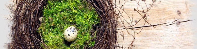 Asilo nido si, asilo nido no